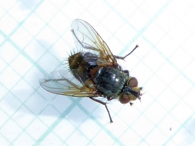 Fly 12