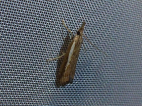 Moth 56