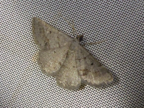 Moth 58