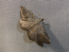 Moth 59