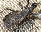 Bug 14