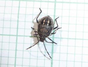Bug 19