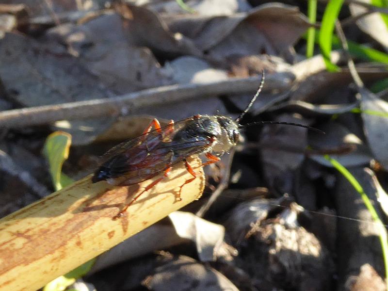 Wasp 27