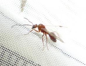 Ant 11