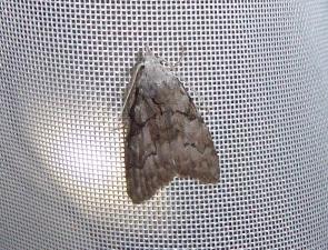 Moth 89