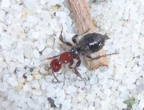 Wasp 34