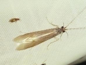 Caddisfly 2