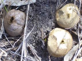 Fungi 1