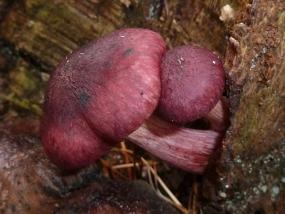 Fungi 13