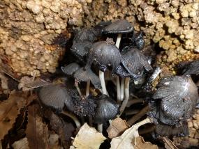 Fungi 21