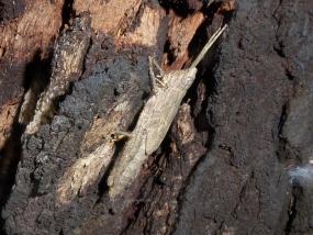 Grasshopper 15