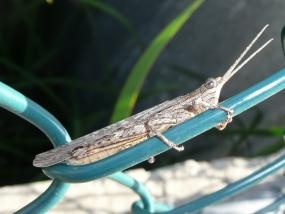 Grasshopper 8