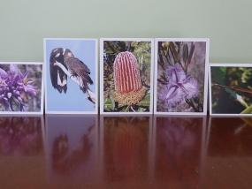 FQPB cards