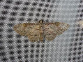 Moth 63