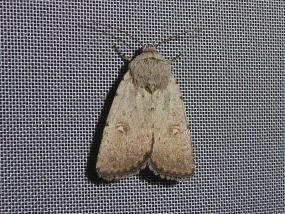Moth 73