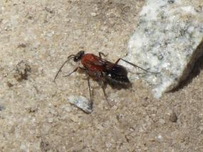 Wasp 19