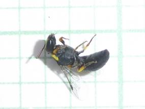 Wasp 23