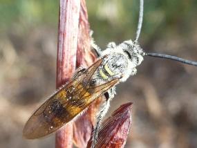 Wasp 8